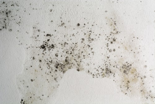 Can Curtain Cleaning Help With My Allergies?
